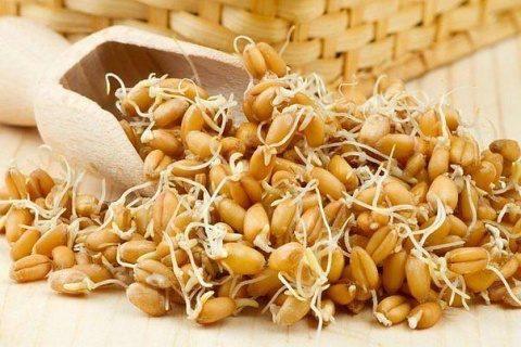 Лечение организма пророщенной пшеницей