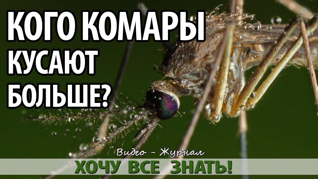 Знаете, почему комары кусают вас больше, чем других?