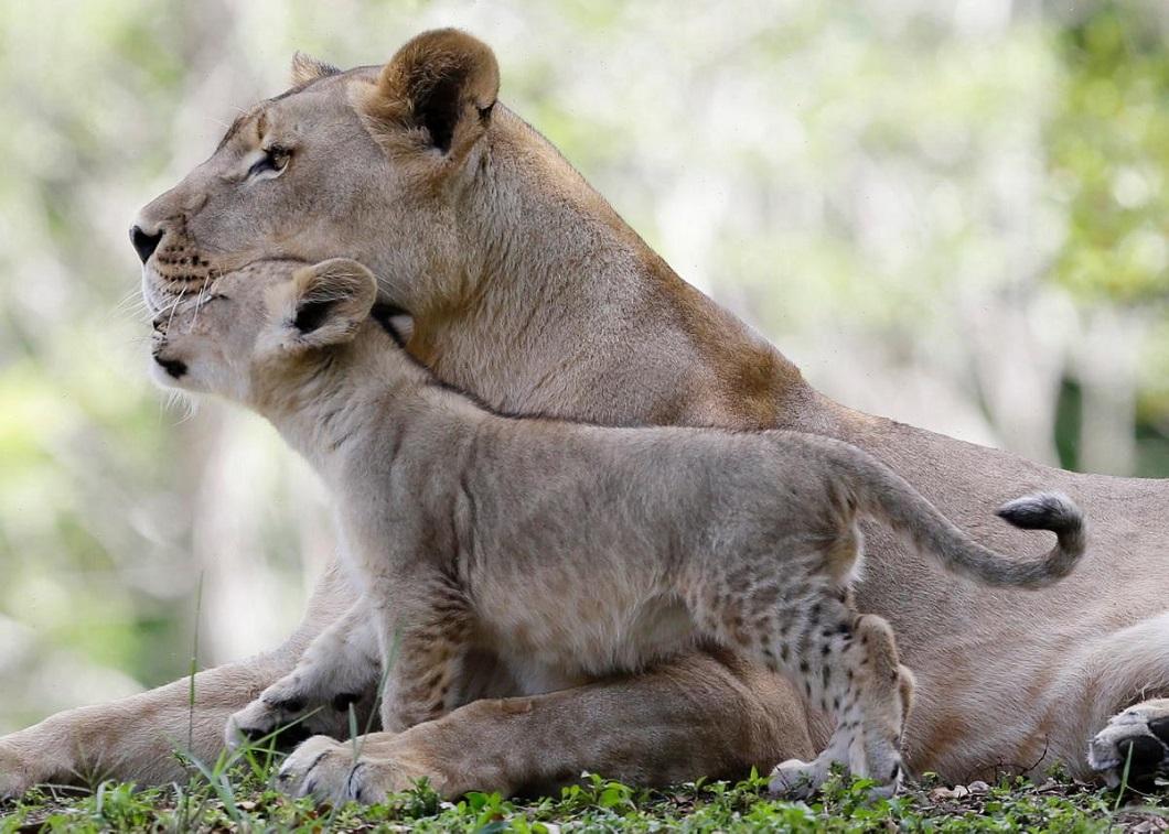 zivotnye za mai 2014 1 ned 20 Лучшие фотографии животных со всего мира за неделю