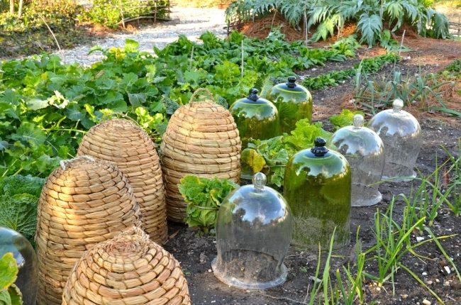 Превращаем дачный участок в английский сад