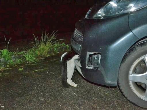 Кот пережил удар автомобиля на скорости 120 км/ч
