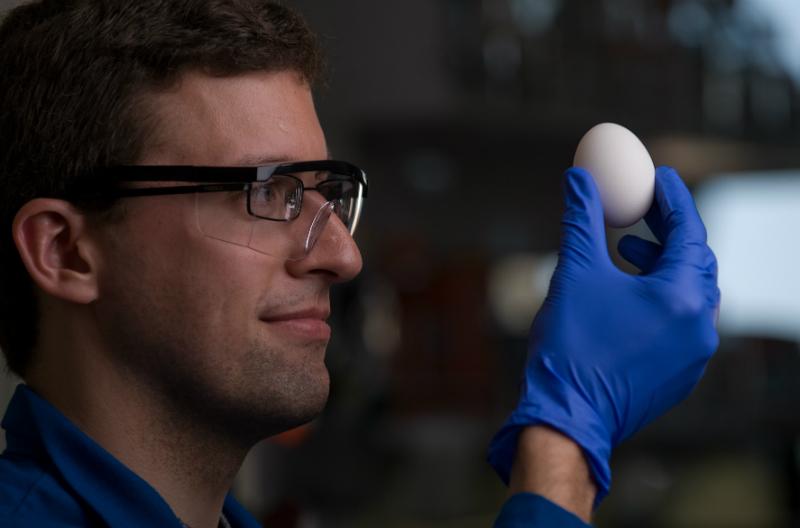 ученые и яйцо