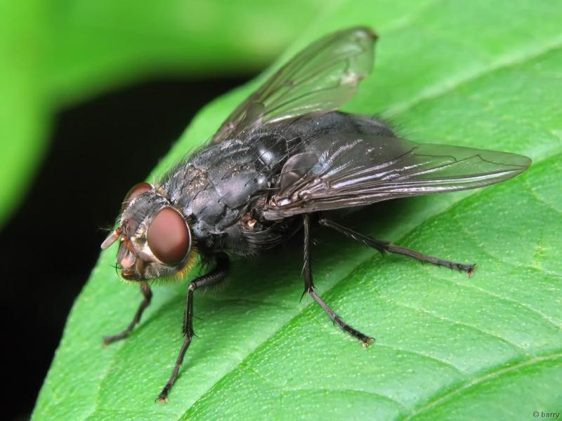 Народные средства борьбы с мухами, комарами и клопами!