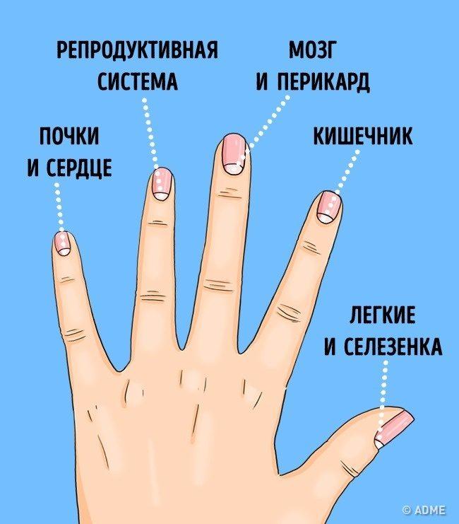 О чём предупреждают нас лунки на ногтях
