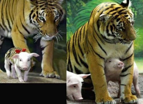 Дружные животные, которые подарят вам улыбку