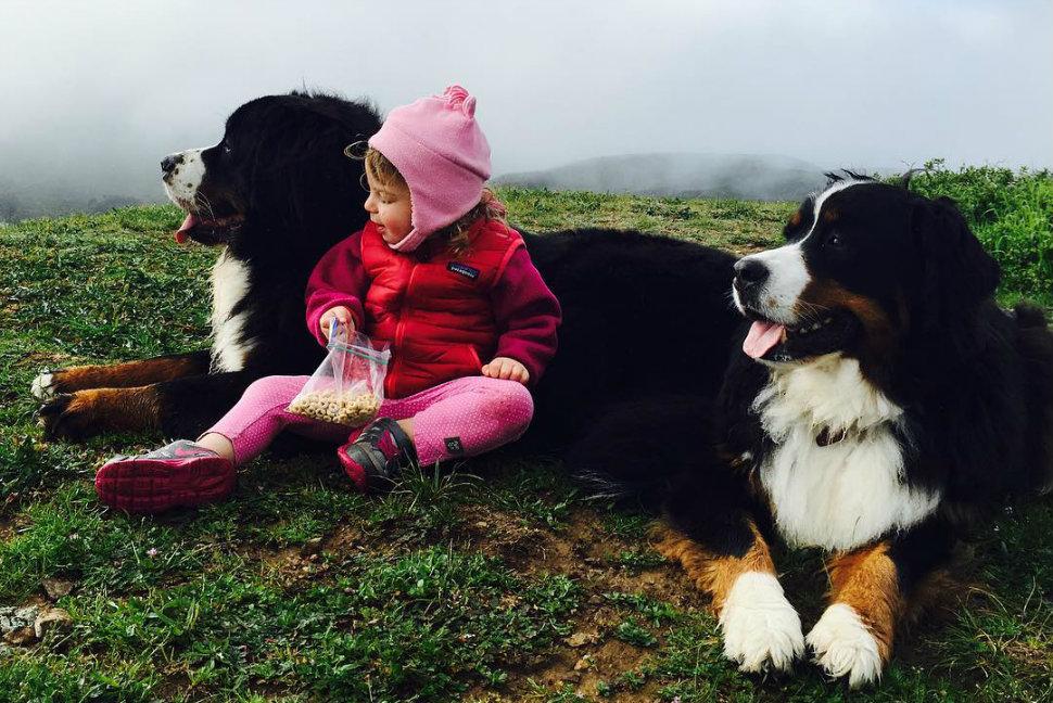 Братья наши «меньшие»: супермилый инстаграм о жизни малышей и их больших собак