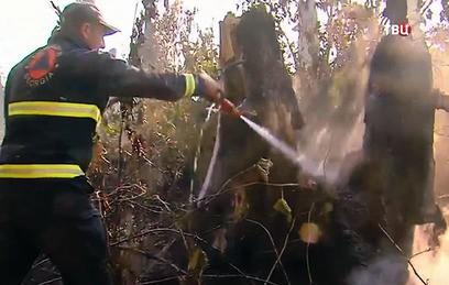 В Боржомском лесу бушует мощный пожар