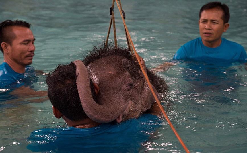 Не вешай хобот! В тайском парке слоненка-инвалида заново учат ходить