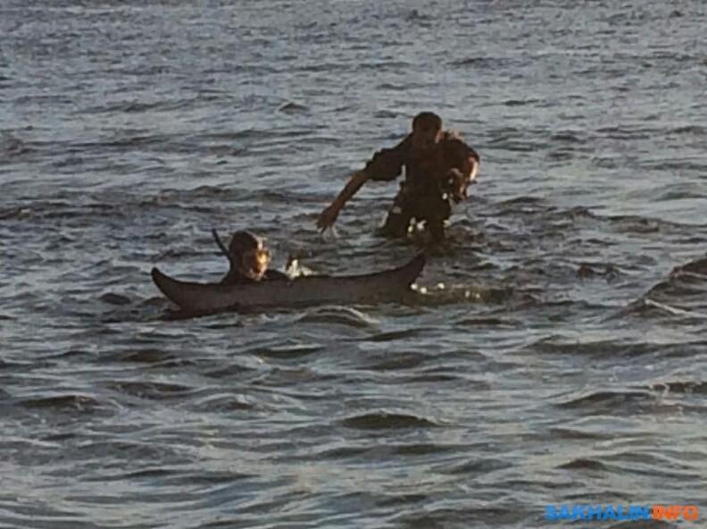 На Сахалине спасли выбросившегося на мель кита-полосатика