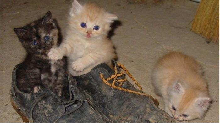 Котиков любят все, но они не помогут подготовить обувь к зимней спячке в шкафу. / Фото: liveinternet.ru