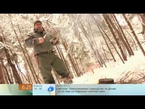 Выживание - Еловый чай в лесу