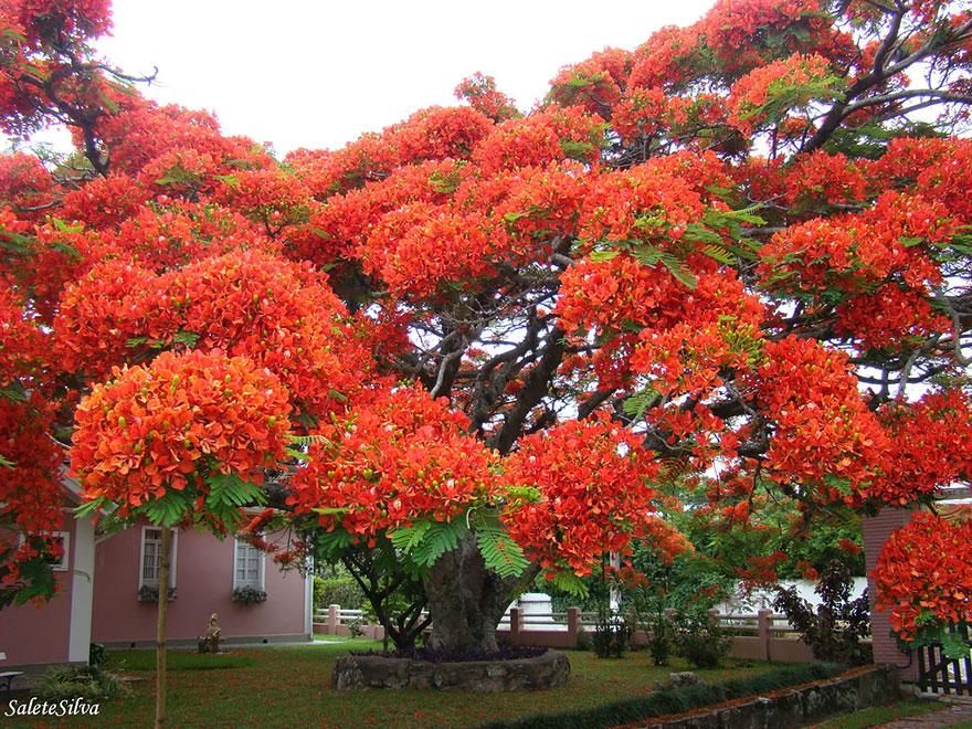 amazing-trees-15