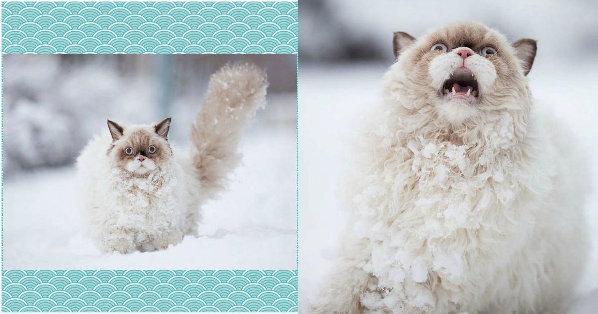 Эти коты настолько драматичны, что заслуживают Оскара! :))