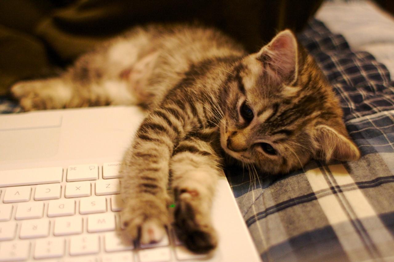 Фото котенок на аву в