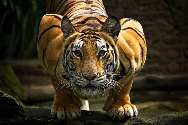 Мир диких животных о объективе фотографов