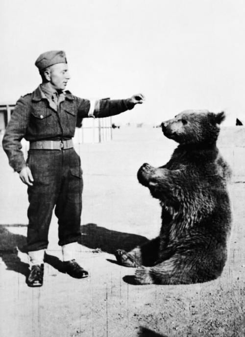 Как Сирийский бурый медведь стал самым необычным солдатом Второй мировой