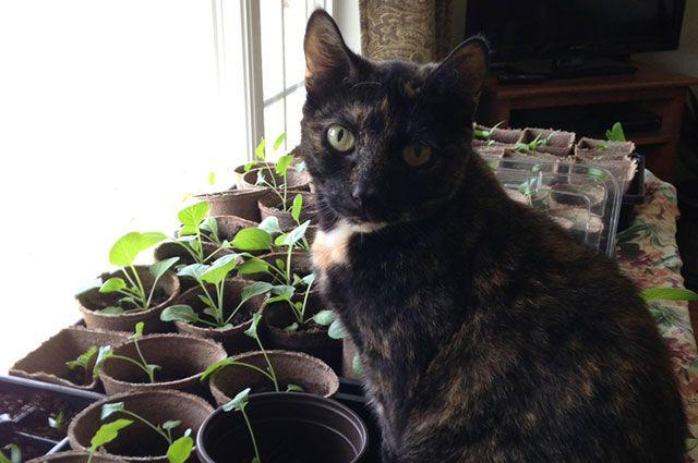 Как защитить рассаду от домашнего питомца?