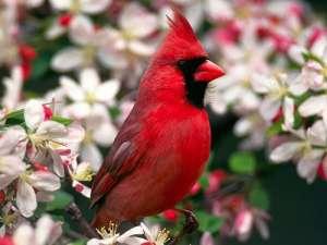 Глобальная система мониторинга птиц
