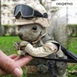 10 животных, сделавших головокружительную карьеру в армии