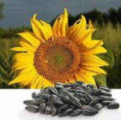 Ввезены безымянные семена