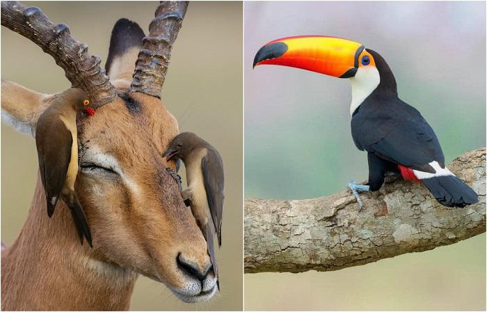 Лучшие фотографии пернатых, присланные на международный конкурс Bird Photographer of the Year