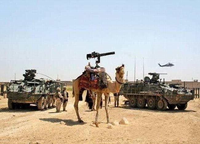 Штурмовой стелс-верблюд и другие вундервафли