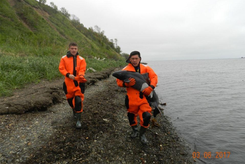 На Сахалине спасатели вернули заблудившегося дельфиненка в море