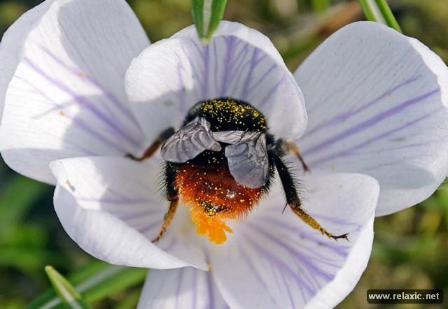 Лучшие фото природы-2012 (53 фото)