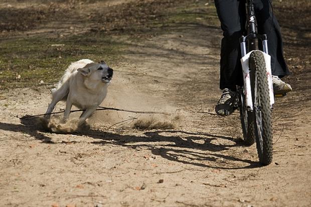Почему собаки нападают на велосипедистов