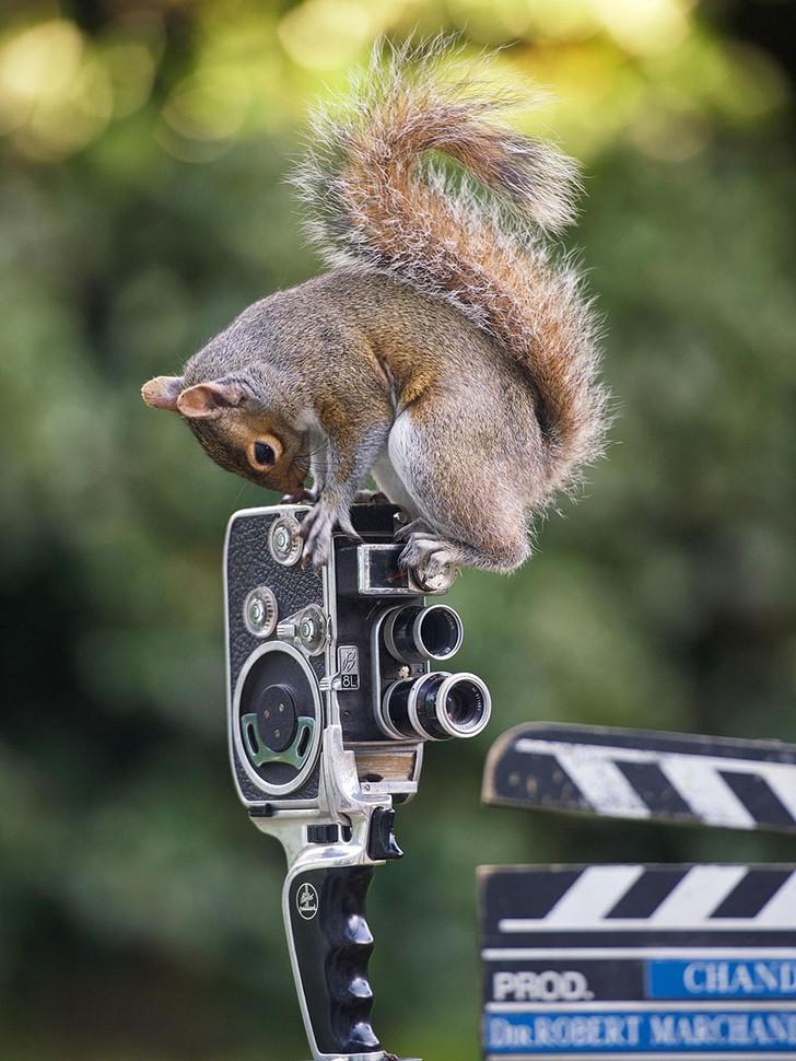 Любопытные белки в кадре британского фотографа Original