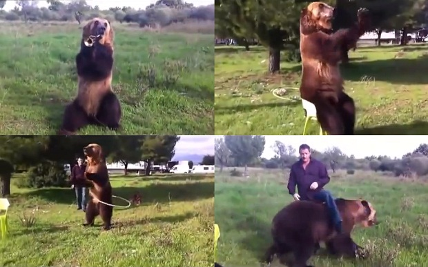 Мегаталантливый русский медведь