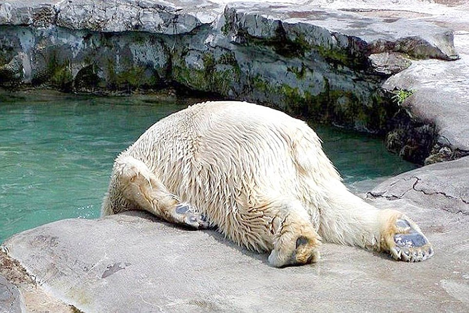 Животные после праздников животные