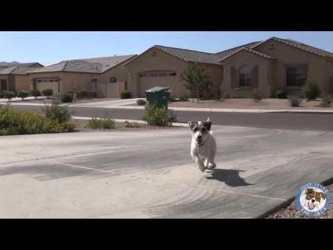 Самая умная собака в Мире попала в книгу(Гиннесса)