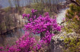 Не терпится! 16 первоцветов среди кустарников и деревьев