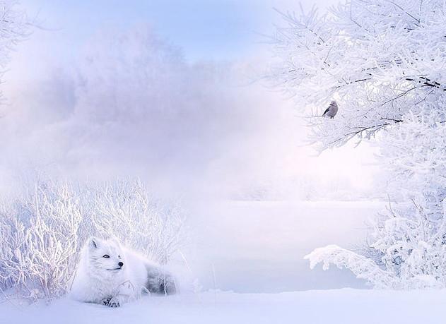 Сказочно красивая Зима! Невероятные фотографии, которые надо увидеть каждому