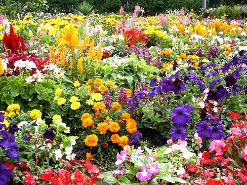 САД, ЦВЕТНИК И ОГОРОД. Выращивание цветов у дома: как выбрать свои цветы