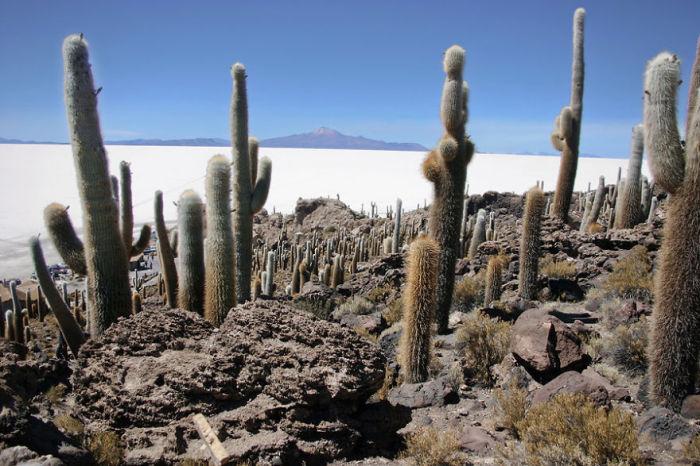 Соленое озеро с кактусами на горе.