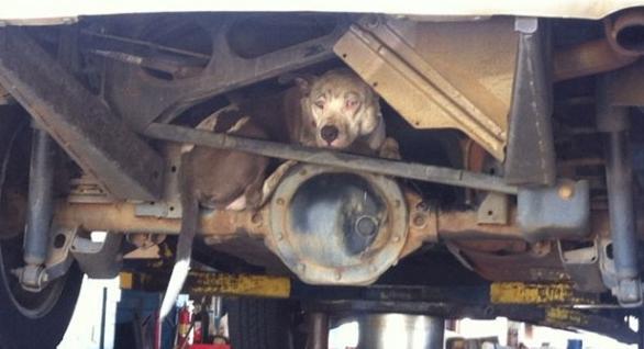 Как собака оказалась «котом в мешке»...