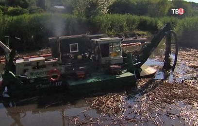 Ростовчане рассказали об экологической катастрофе на реке Темерник