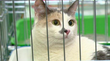 Выставка беспородных кошек состоится в столице Приморья