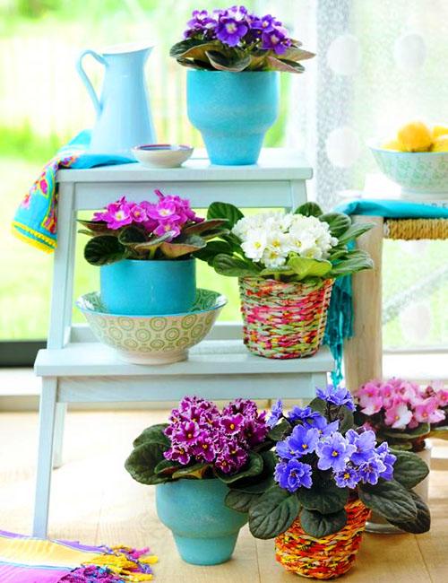 Как поливать фиалки в домашних условиях: различные способы?