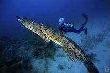 Плавание с крокодилами – новый вид отдыха во Флориде
