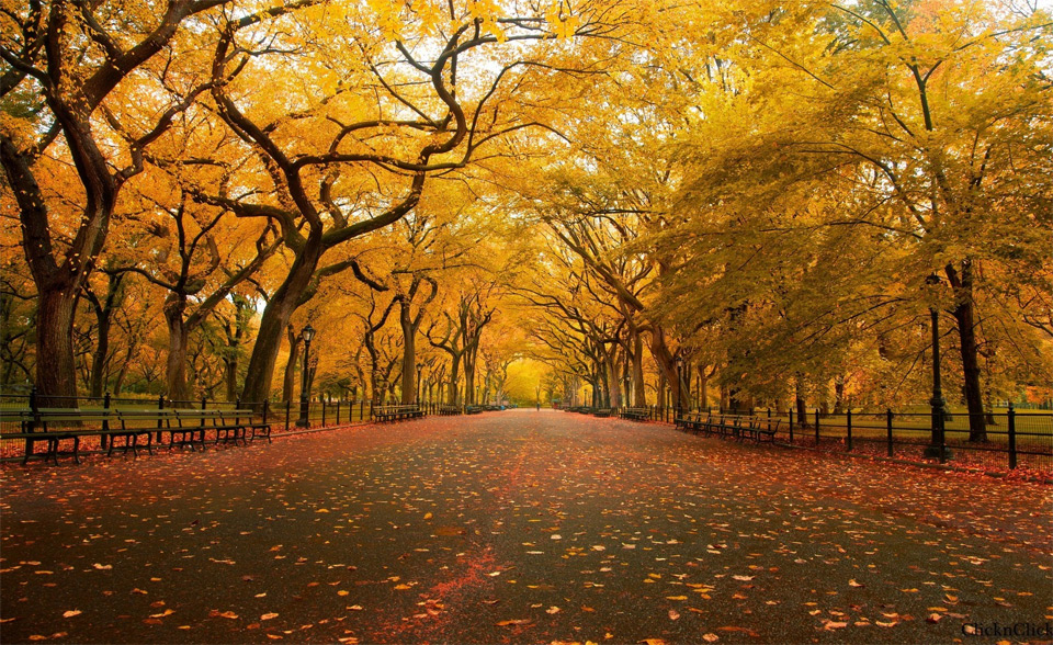 Осенний парк стал местом перетраха