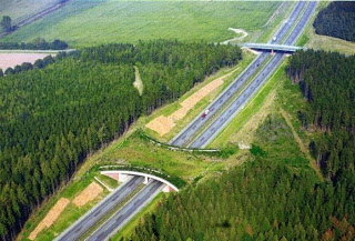 «Экодук» — новое сооружение на российских дорогах