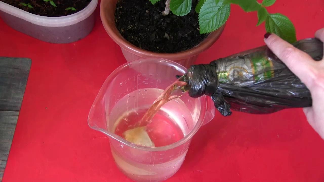 Зачем поливать пивом рассаду и комнатные растения?