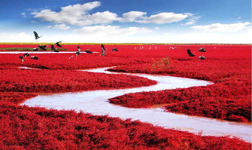 17. Красный пляж Паньцзинь, Китай земля, красота, планета, природа