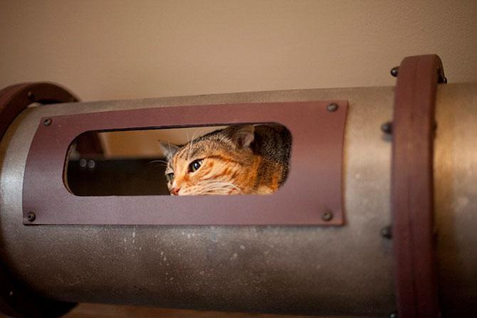 Кошачья транзитная система