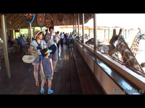 Бангкок. Сафари - парк: кормление жирафов, танцы слонят (клип)