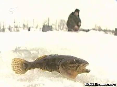 лучше рыба клюет после обеда