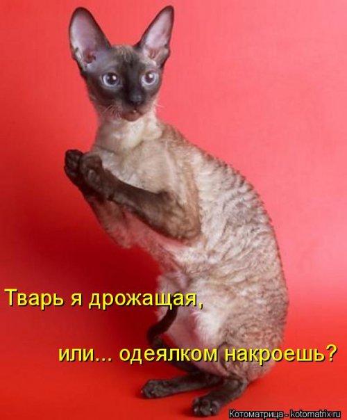 Очередной сборник котоматриц